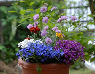 鉢植えの土作りのコツ