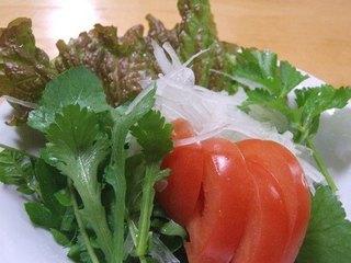 タマネギの育て方|植え付けタイミングと苗の大きさがコツ