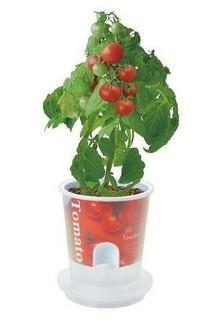 tomatosaibai-kit.jpg
