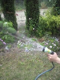 留守中の水やり|手軽で確実な方法